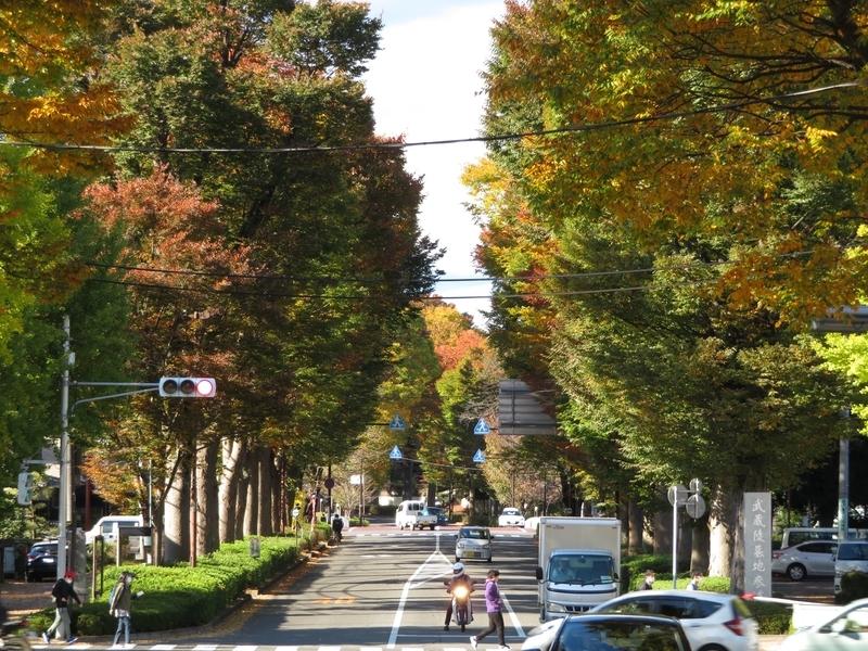 2020/11/10/武蔵陵墓地参道2