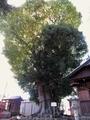 2020/11/10/縁結びの木