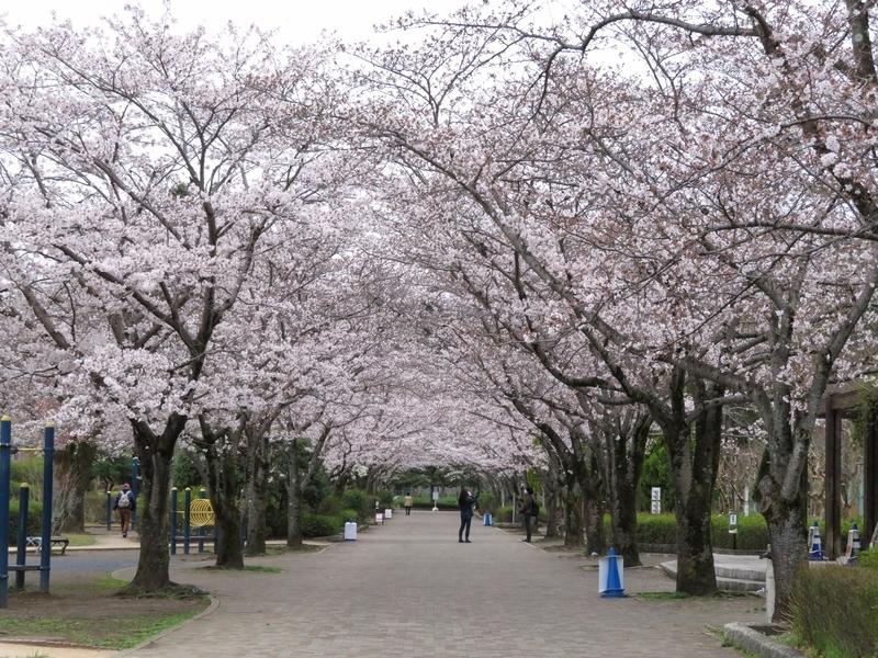 f:id:Nakano_Hitsuji:20210325145748j:plain