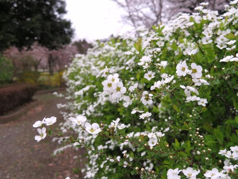 f:id:Nakano_Hitsuji:20210325150245j:plain