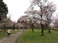 2021/03/25/さくら広場
