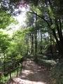 2021/04/12/第二樹林2