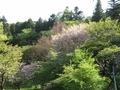2021/04/12/サクラ保存林2