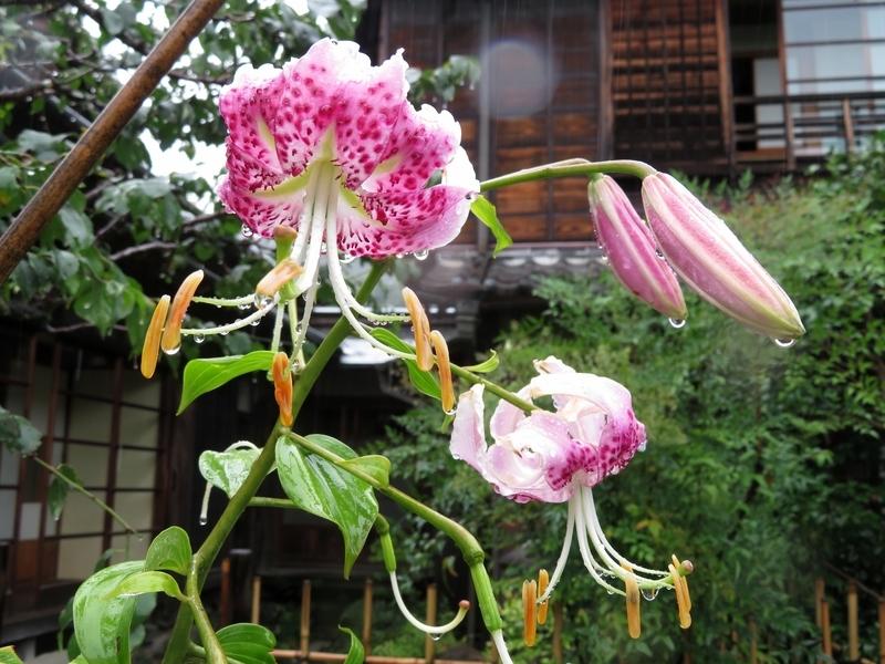 f:id:Nakano_Hitsuji:20210815143019j:plain