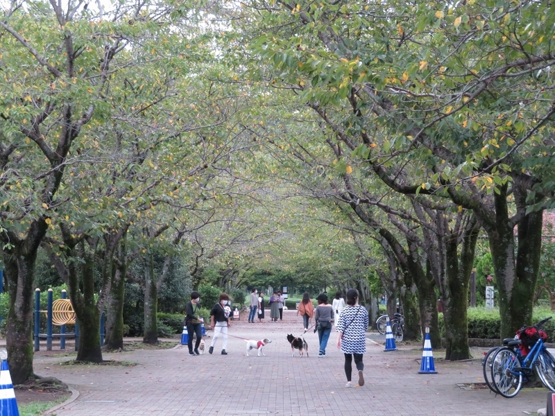f:id:Nakano_Hitsuji:20210905164145j:plain