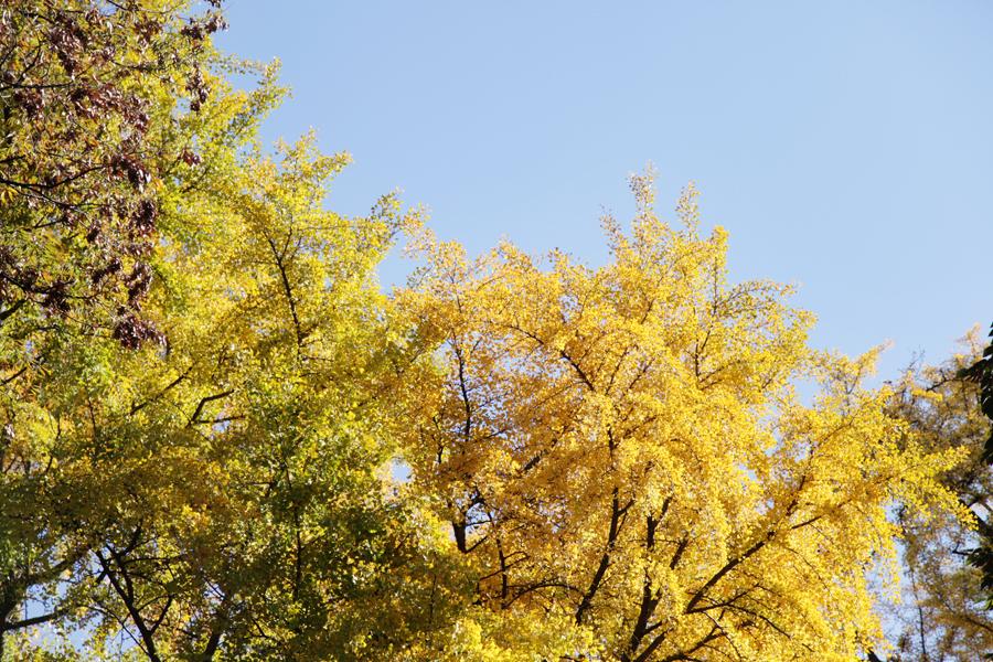 f:id:Nakaochiai_Aozora_Photography:20141225130128j:plain
