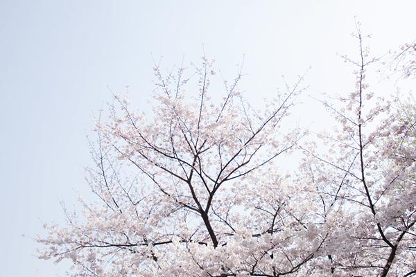 f:id:Nakaochiai_Aozora_Photography:20150404132932j:plain