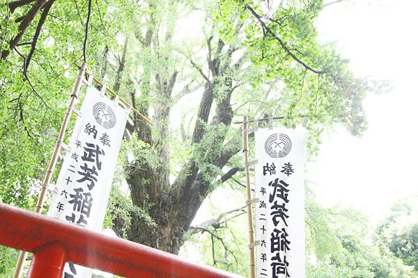 f:id:Nakaochiai_Aozora_Photography:20150915154415j:plain