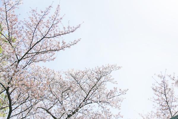 f:id:Nakaochiai_Aozora_Photography:20180414160621j:plain