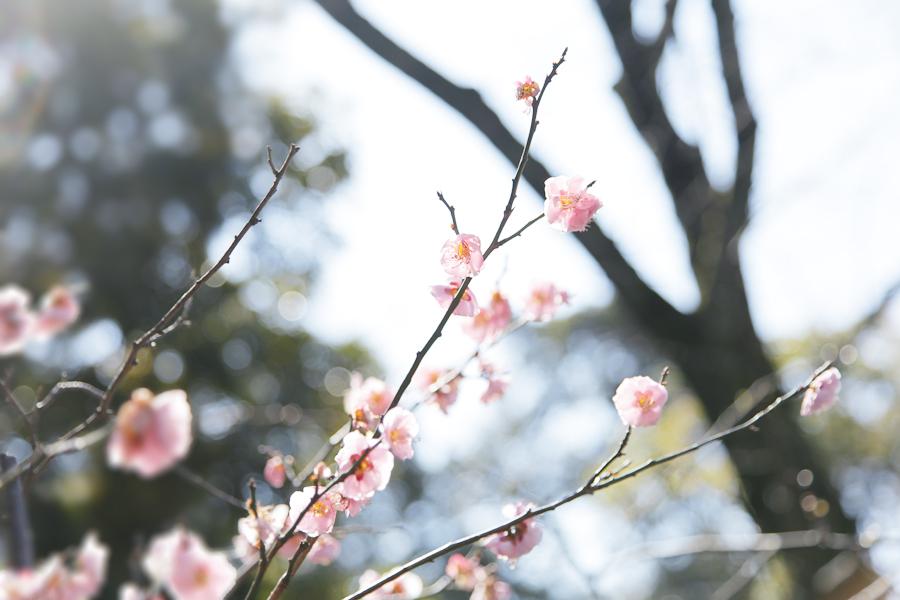 f:id:Nakaochiai_Aozora_Photography:20190309154559j:plain