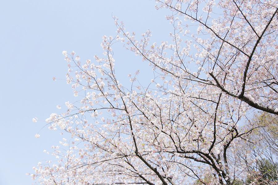f:id:Nakaochiai_Aozora_Photography:20191030161900j:plain