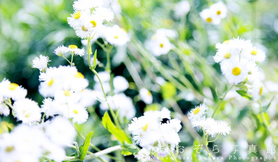 f:id:Nakaochiai_Aozora_Photography:20191105181545j:plain