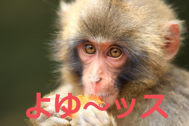 f:id:Namasuo:20161019191752j:plain