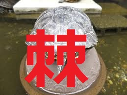 f:id:Namasuo:20161107224538j:plain