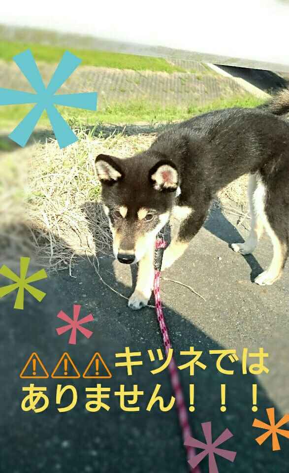 f:id:NanaToYamato:20161105084211j:plain