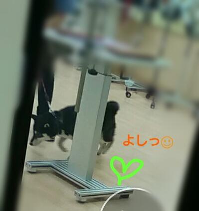 f:id:NanaToYamato:20170312085635j:plain