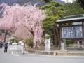 身延山久遠寺with桜01