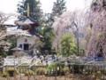 身延山久遠寺with桜02