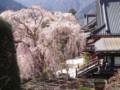 身延山久遠寺with桜03