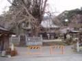 本国寺の「お葉つきイチョウ」
