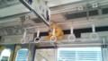伊賀鉄道車内に潜む忍者