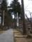 高杉の参道