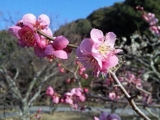 f:id:Naoki__Ito:20120318054352j:image