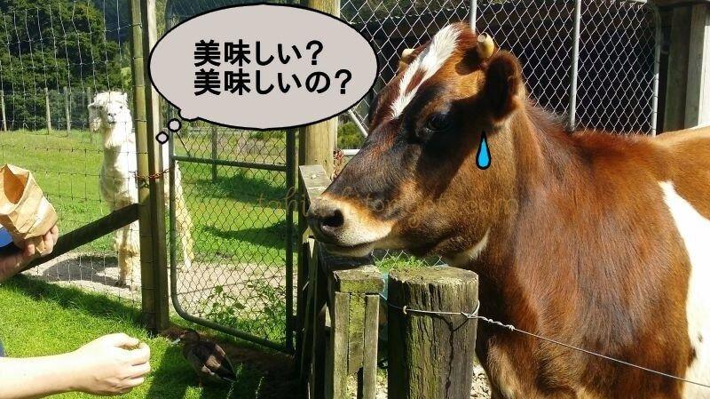 f:id:Nariyuki:20180425065229j:plain