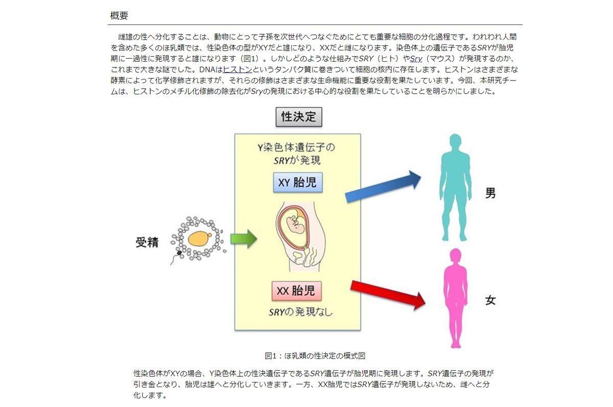 性決定の因子とY染色体遺伝子のSRY遺伝子