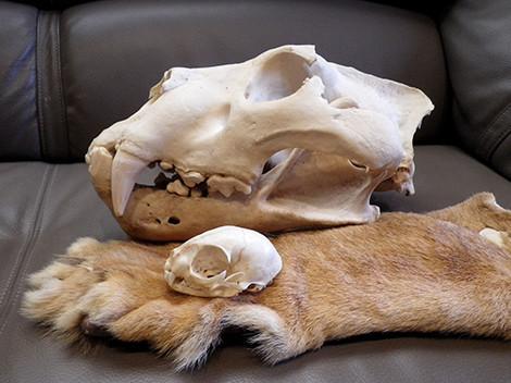 f:id:Naturalhistory:20200222152457j:plain