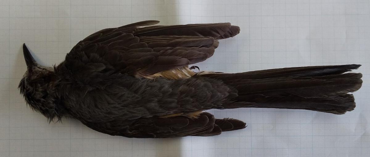 f:id:Naturalhistory:20200504153158j:plain