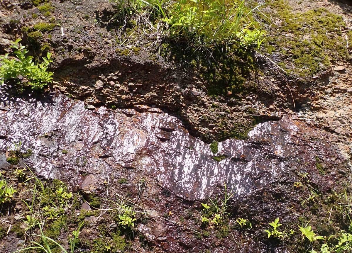 f:id:Naturalhistory:20200620110009j:plain