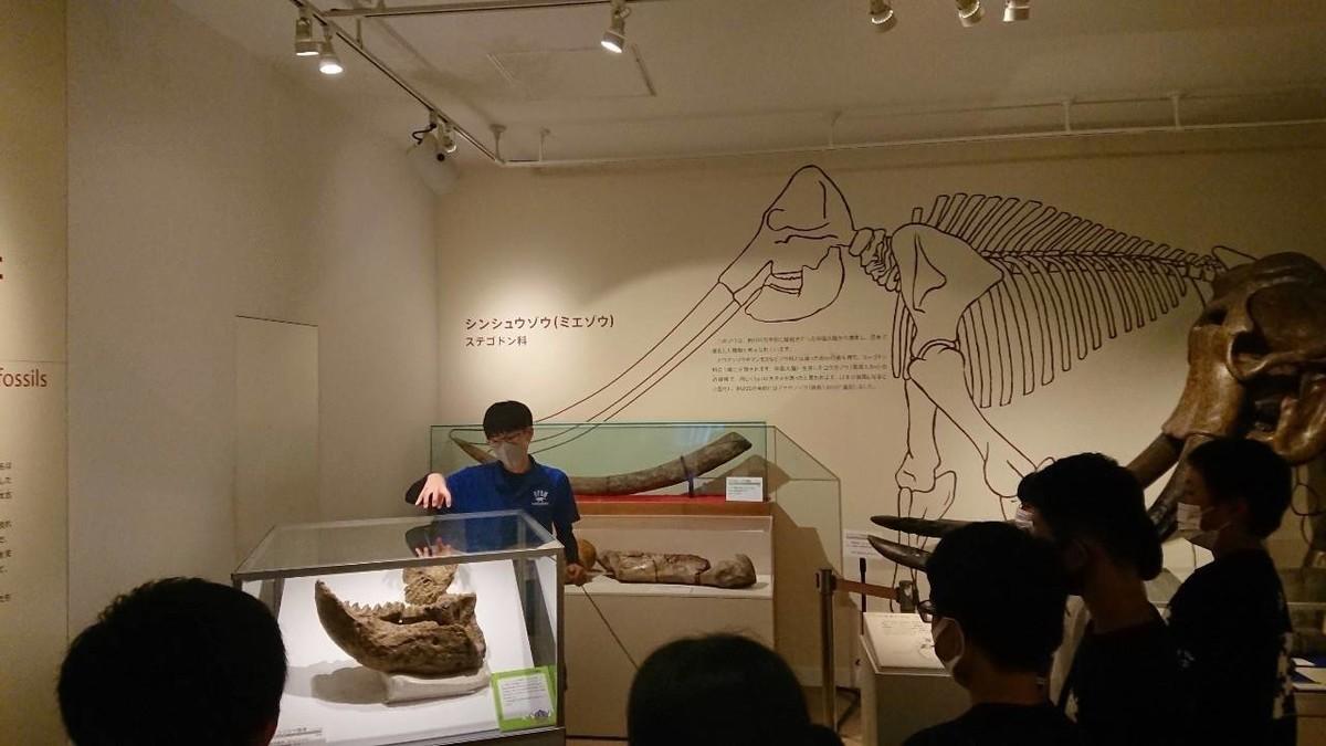 f:id:Naturalhistory:20200918160028j:plain