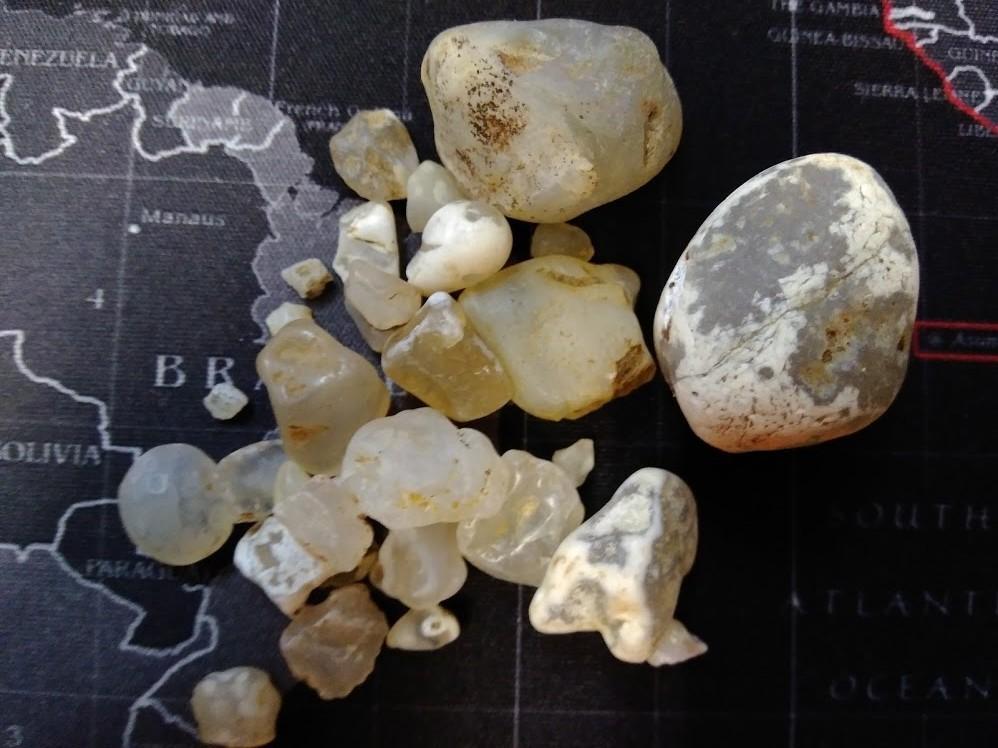 f:id:Naturalhistory:20200918160126j:plain