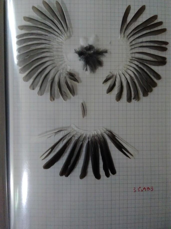 f:id:Naturalhistory:20201022161042j:plain