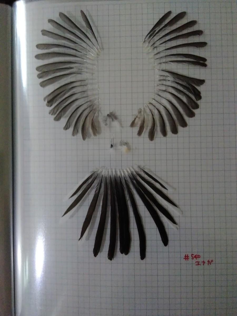 f:id:Naturalhistory:20201022161047j:plain