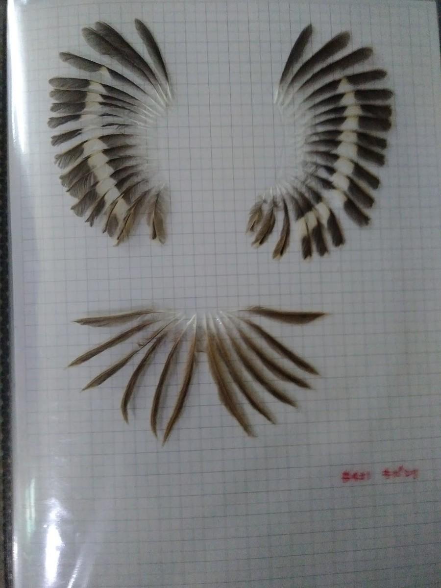 f:id:Naturalhistory:20201022161049j:plain