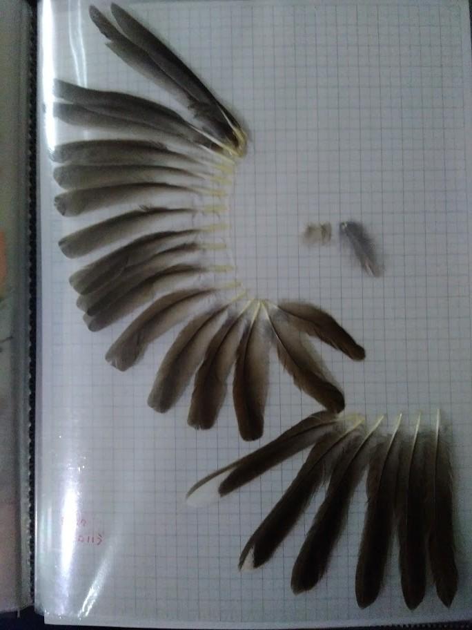 f:id:Naturalhistory:20201022161053j:plain