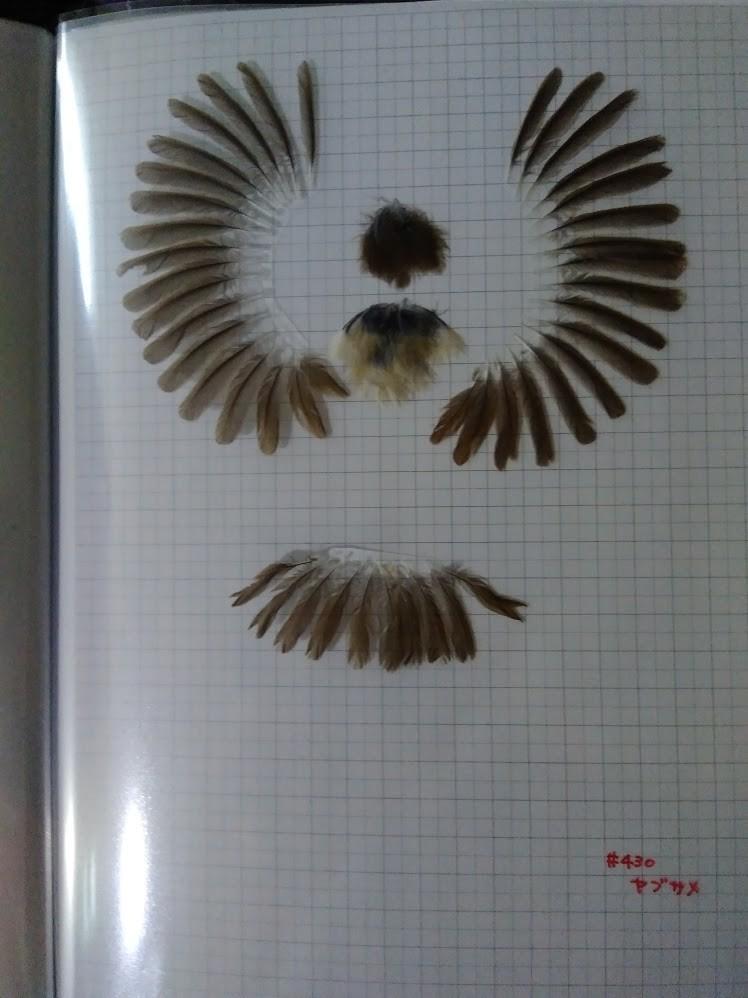 f:id:Naturalhistory:20201022161625j:plain