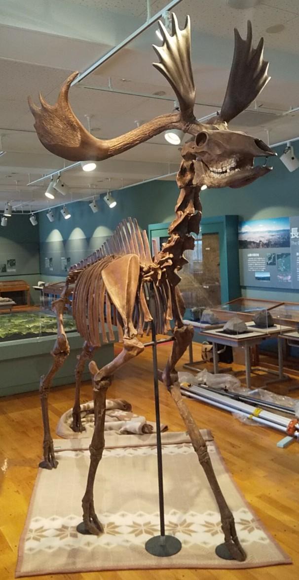 f:id:Naturalhistory:20210922164520j:plain