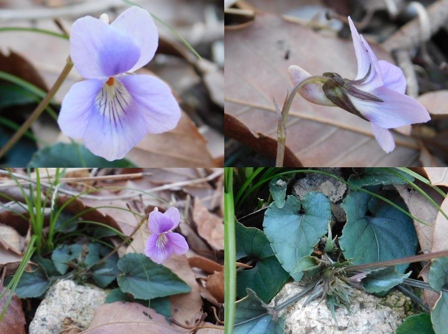 f:id:NatureAroundTakarazuka:20190317135340j:plain