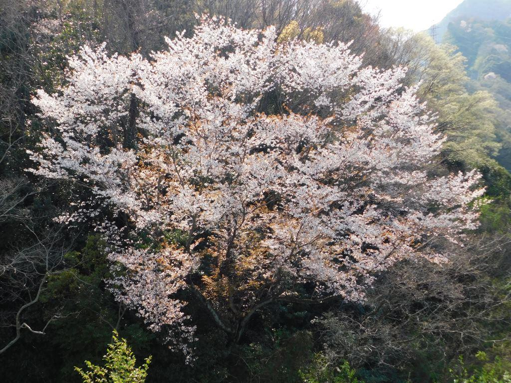 f:id:NatureAroundTakarazuka:20200404194756j:plain