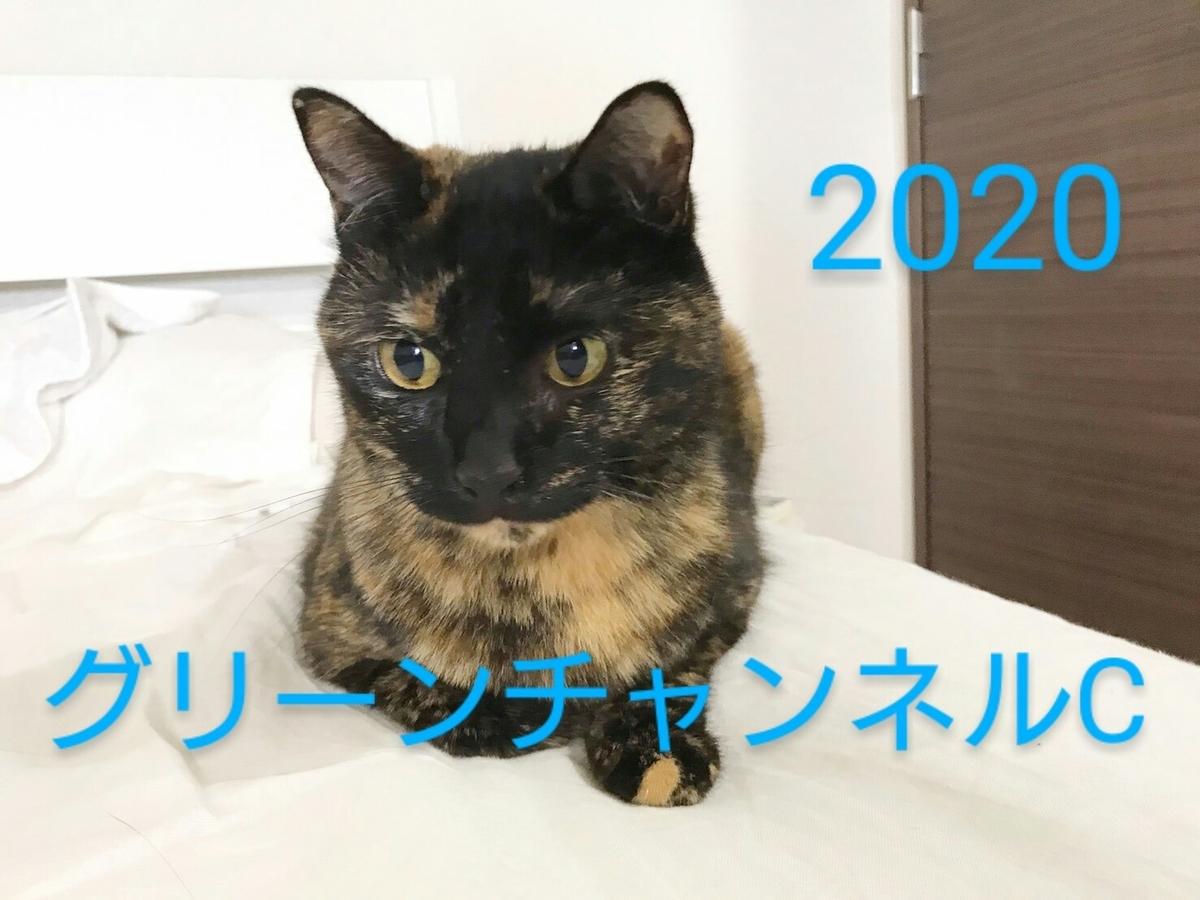 f:id:Nekokeiba:20201020230245j:plain