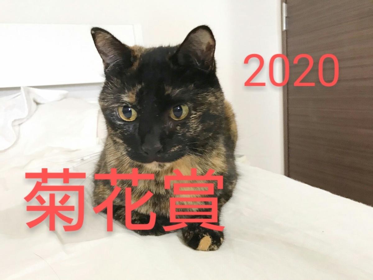 f:id:Nekokeiba:20201024214920j:plain