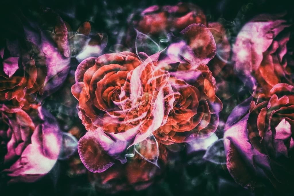 ノスタルジックな薔薇