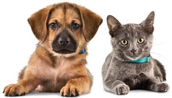 pets-cat-dog