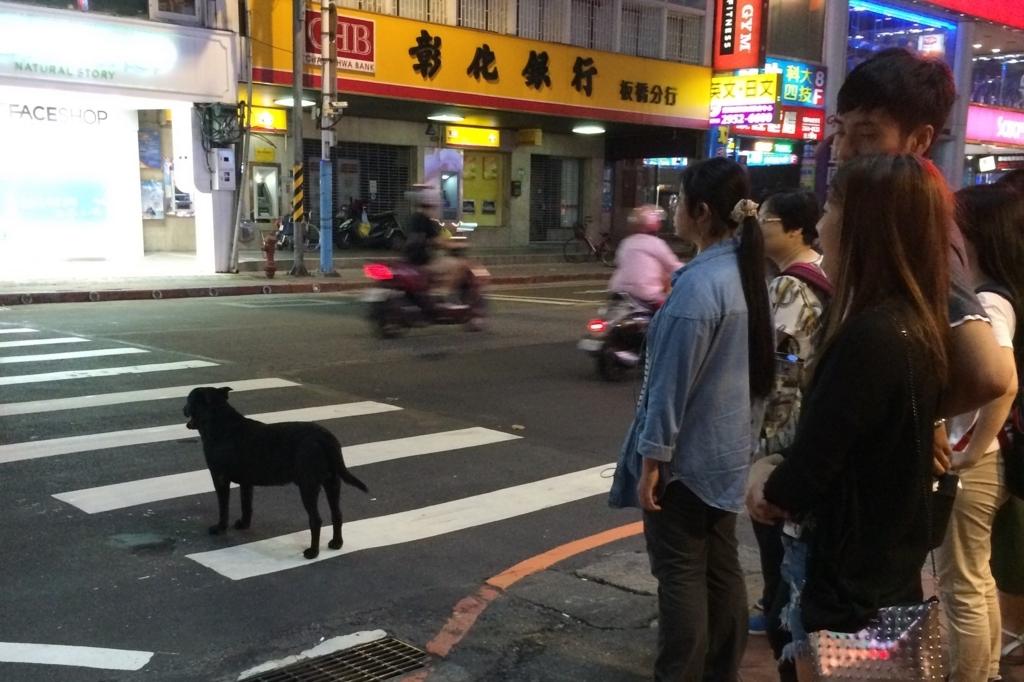 台湾の信号待ちしてる犬