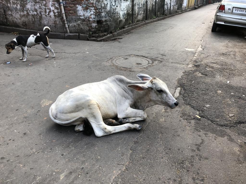 インドの路上のヤギ