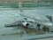 アシアナ航空 A320-200