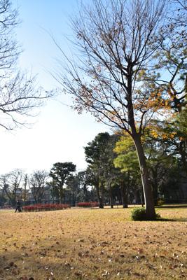 f:id:Nikon1J2dejicame:20171222135215j:plain
